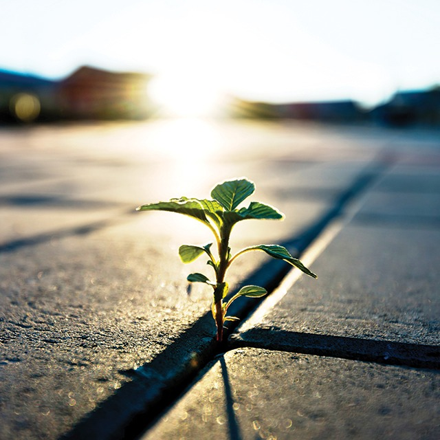 Seedling growing from pavement